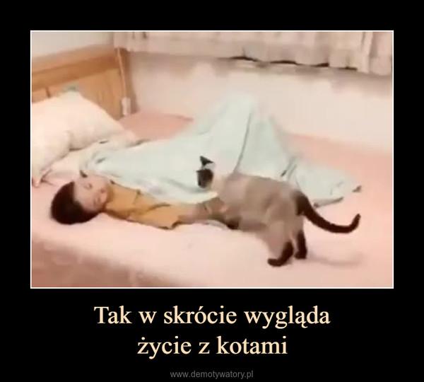 Tak w skrócie wyglądażycie z kotami –