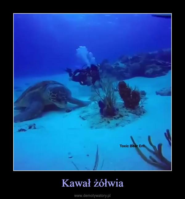 Kawał żółwia –
