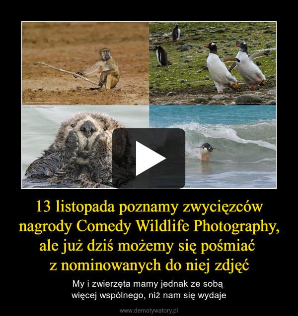 13 listopada poznamy zwycięzców nagrody Comedy Wildlife Photography, ale już dziś możemy się pośmiać z nominowanych do niej zdjęć – My i zwierzęta mamy jednak ze sobą więcej wspólnego, niż nam się wydaje