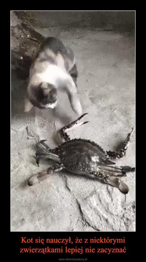 Kot się nauczył, że z niektórymi zwierzątkami lepiej nie zacyznać –