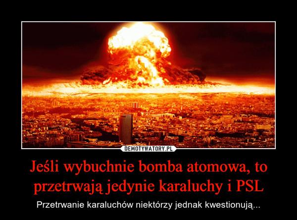 Jeśli wybuchnie bomba atomowa, to przetrwają jedynie karaluchy i PSL – Przetrwanie karaluchów niektórzy jednak kwestionują...