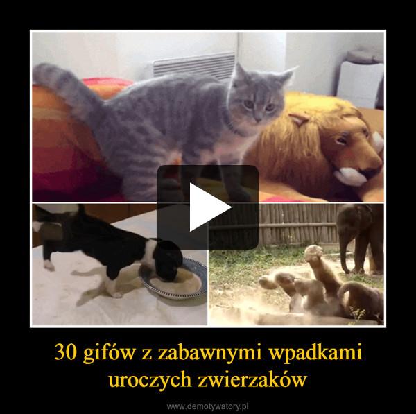 30 gifów z zabawnymi wpadkami uroczych zwierzaków –