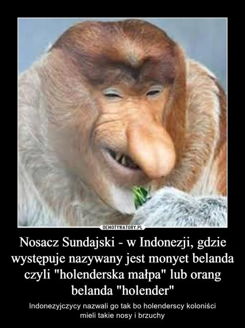 """Nosacz Sundajski - w Indonezji, gdzie występuje nazywany jest monyet belanda czyli """"holenderska małpa"""" lub orang belanda """"holender"""""""