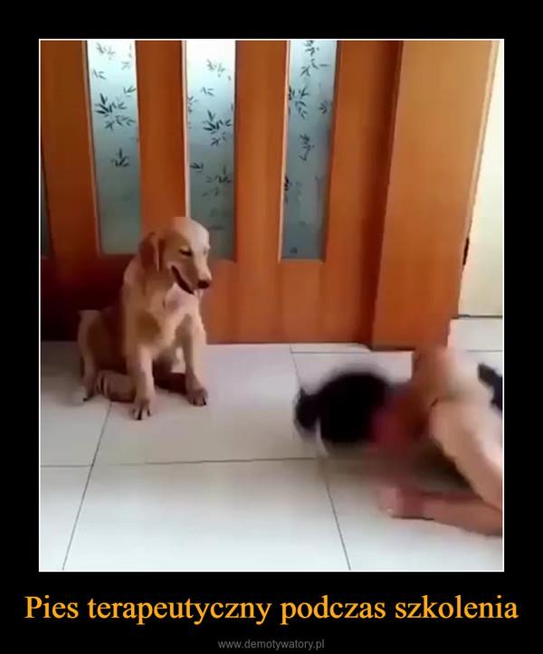Pies terapeutyczny podczas szkolenia –