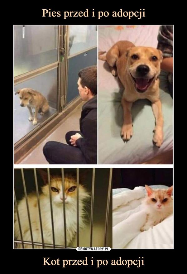 Kot przed i po adopcji –