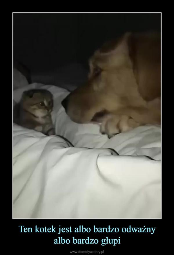 Ten kotek jest albo bardzo odważnyalbo bardzo głupi –