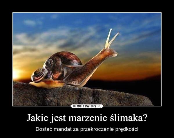Jakie jest marzenie ślimaka? – Dostać mandat za przekroczenie prędkości