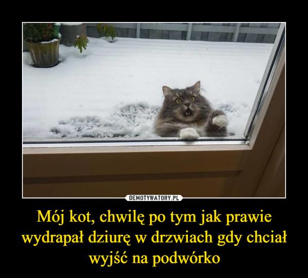 Mój kot, chwilę po tym jak prawie wydrapał dziurę w drzwiach gdy chciał wyjść na podwórko –