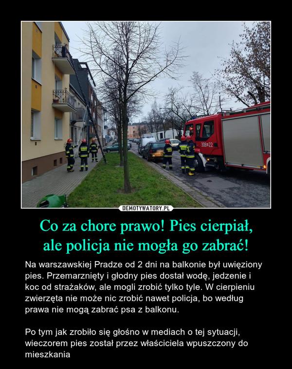 Co za chore prawo! Pies cierpiał,ale policja nie mogła go zabrać! – Na warszawskiej Pradze od 2 dni na balkonie był uwięziony pies. Przemarznięty i głodny pies dostał wodę, jedzenie i koc od strażaków, ale mogli zrobić tylko tyle. W cierpieniu zwierzęta nie może nic zrobić nawet policja, bo według prawa nie mogą zabrać psa z balkonu.Po tym jak zrobiło się głośno w mediach o tej sytuacji, wieczorem pies został przez właściciela wpuszczony do mieszkania