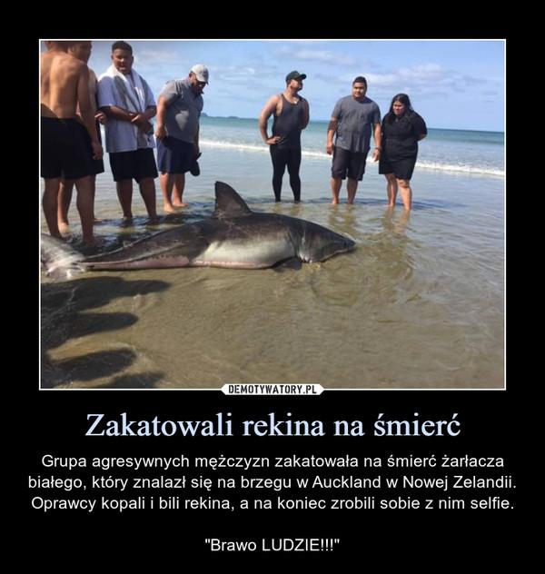"""Zakatowali rekina na śmierć – Grupa agresywnych mężczyzn zakatowała na śmierć żarłacza białego, który znalazł się na brzegu w Auckland w Nowej Zelandii. Oprawcy kopali i bili rekina, a na koniec zrobili sobie z nim selfie.""""Brawo LUDZIE!!!"""""""
