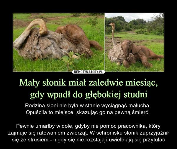 Mały słonik miał zaledwie miesiąc,gdy wpadł do głębokiej studni – Rodzina słoni nie była w stanie wyciągnąć malucha. Opuściła to miejsce, skazując go na pewną śmierć. Pewnie umarłby w dole, gdyby nie pomoc pracownika, który zajmuje się ratowaniem zwierząt. W schronisku słonik zaprzyjaźnił się ze strusiem - nigdy się nie rozstają i uwielbiają się przytulać