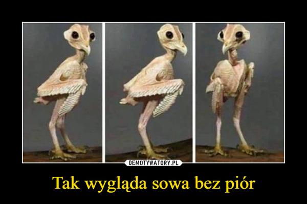 Tak wygląda sowa bez piór –