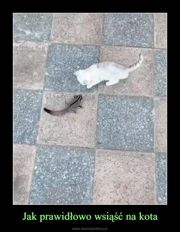 Jak prawidłowo wsiąść na kota –
