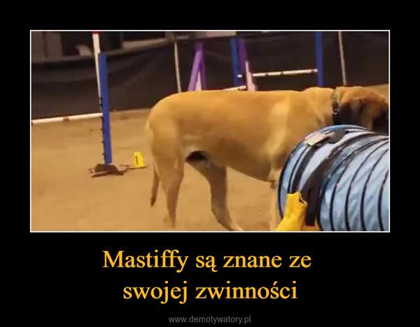Mastiffy są znane ze swojej zwinności –