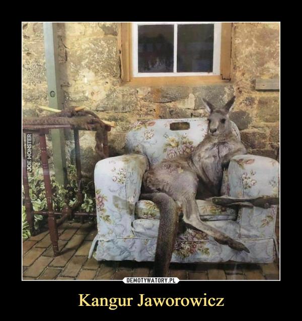 Kangur Jaworowicz –