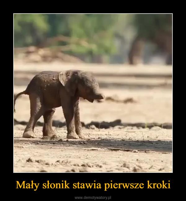 Mały słonik stawia pierwsze kroki –