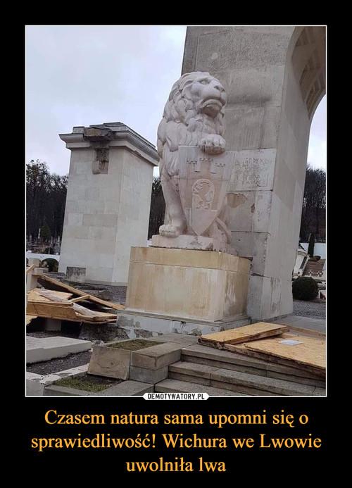 Czasem natura sama upomni się o sprawiedliwość! Wichura we Lwowie uwolniła lwa
