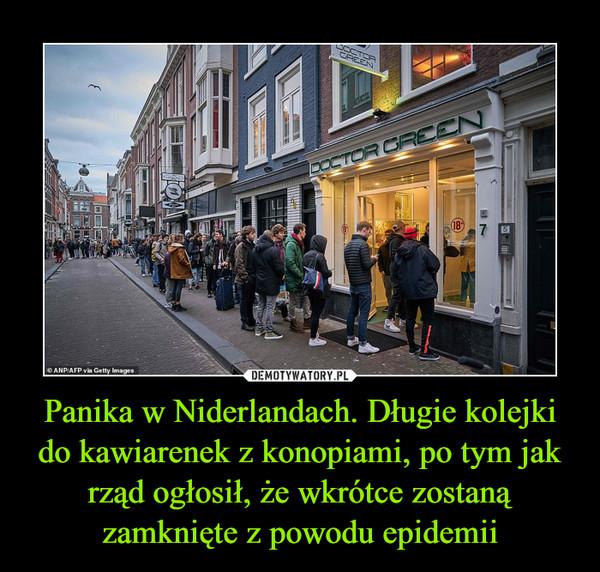 Panika w Niderlandach. Długie kolejki do kawiarenek z konopiami, po tym jak rząd ogłosił, że wkrótce zostaną zamknięte z powodu epidemii –