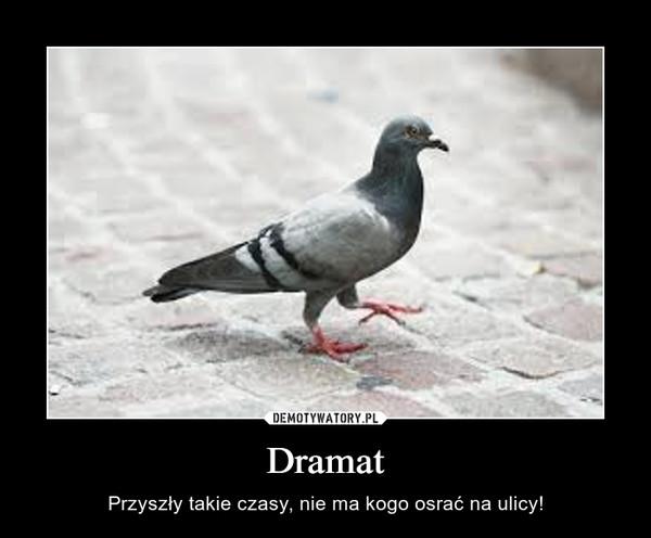 Dramat – Przyszły takie czasy, nie ma kogo osrać na ulicy!