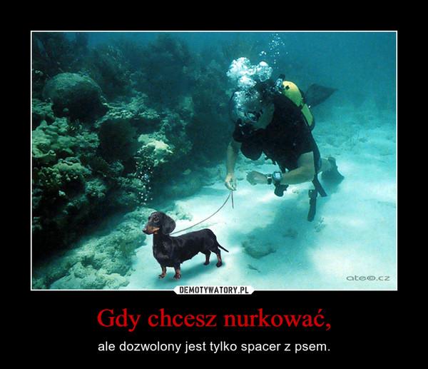 Gdy chcesz nurkować, – ale dozwolony jest tylko spacer z psem.