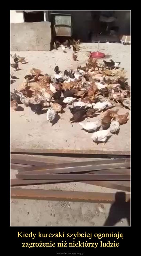 Kiedy kurczaki szybciej ogarniają zagrożenie niż niektórzy ludzie –