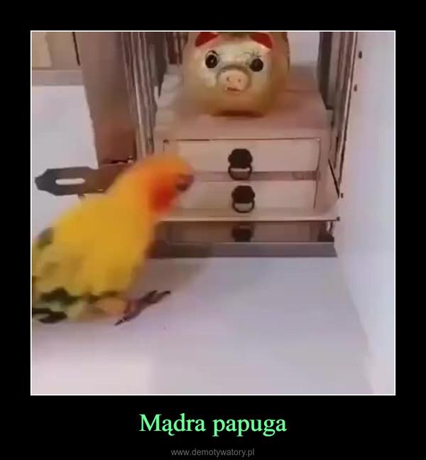 Mądra papuga –