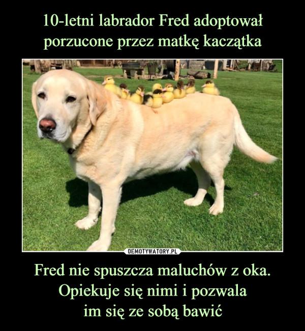 Fred nie spuszcza maluchów z oka. Opiekuje się nimi i pozwalaim się ze sobą bawić –