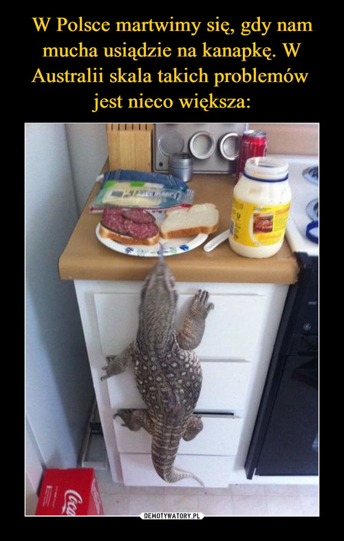 W Polsce martwimy się, gdy nam mucha usiądzie na kanapkę. W Australii skala takich problemów  jest nieco większa: