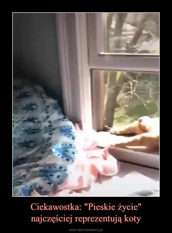 """Ciekawostka: """"Pieskie życie""""najczęściej reprezentują koty –"""