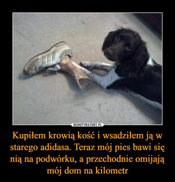 Kupiłem krowią kość i wsadziłem ją w starego adidasa. Teraz mój pies bawi się nią na podwórku, a przechodnie omijają mój dom na kilometr –