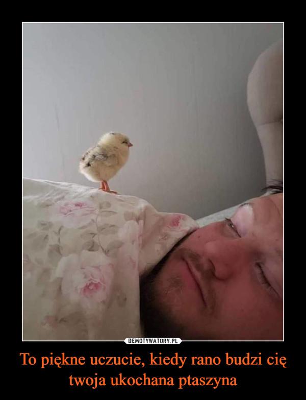 To piękne uczucie, kiedy rano budzi cię twoja ukochana ptaszyna –
