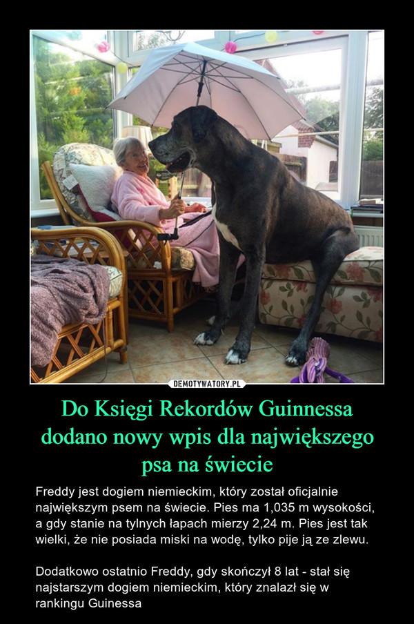 Do Księgi Rekordów Guinnessadodano nowy wpis dla największegopsa na świecie – Freddy jest dogiem niemieckim, który został oficjalnie największym psem na świecie. Pies ma 1,035 m wysokości, a gdy stanie na tylnych łapach mierzy 2,24 m. Pies jest tak wielki, że nie posiada miski na wodę, tylko pije ją ze zlewu. Dodatkowo ostatnio Freddy, gdy skończył 8 lat - stał się najstarszym dogiem niemieckim, który znalazł się w rankingu Guinessa