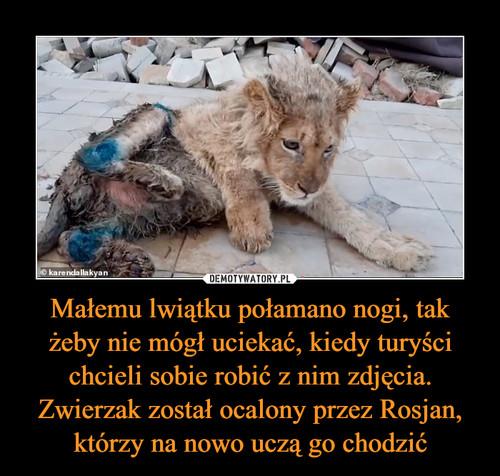 Małemu lwiątku połamano nogi, tak żeby nie mógł uciekać, kiedy turyści chcieli sobie robić z nim zdjęcia. Zwierzak został ocalony przez Rosjan, którzy na nowo uczą go chodzić