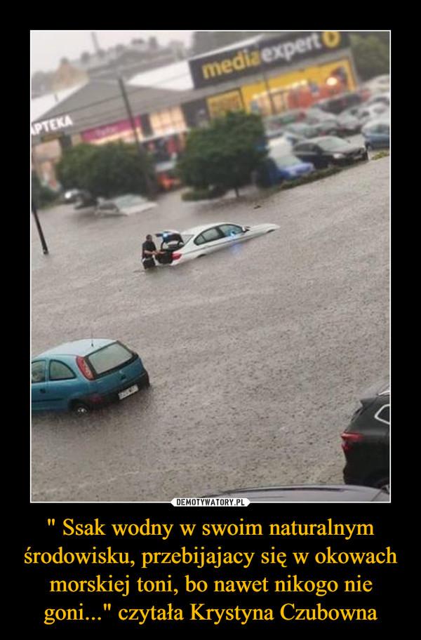 """"""" Ssak wodny w swoim naturalnym środowisku, przebijajacy się w okowach morskiej toni, bo nawet nikogo nie goni..."""" czytała Krystyna Czubowna –"""