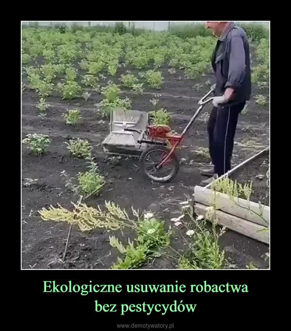 Ekologiczne usuwanie robactwabez pestycydów –