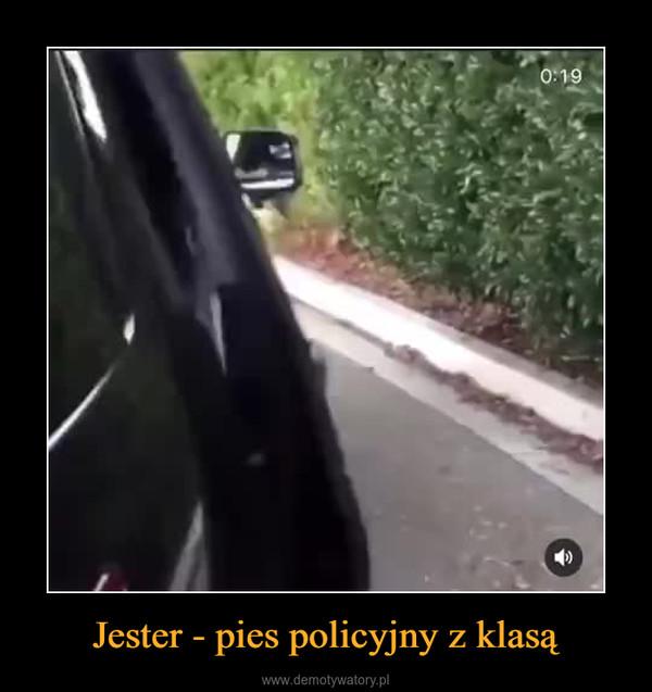 Jester - pies policyjny z klasą –
