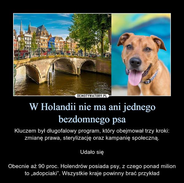 """W Holandii nie ma ani jednego bezdomnego psa – Kluczem był długofalowy program, który obejmował trzy kroki: zmianę prawa, sterylizację oraz kampanię społeczną.Udało sięObecnie aż 90 proc. Holendrów posiada psy, z czego ponad milion to """"adopciaki"""". Wszystkie kraje powinny brać przykład"""