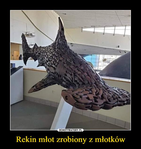 Rekin młot zrobiony z młotków –