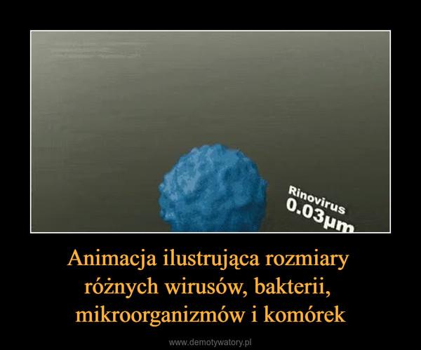 Animacja ilustrująca rozmiary różnych wirusów, bakterii, mikroorganizmów i komórek –