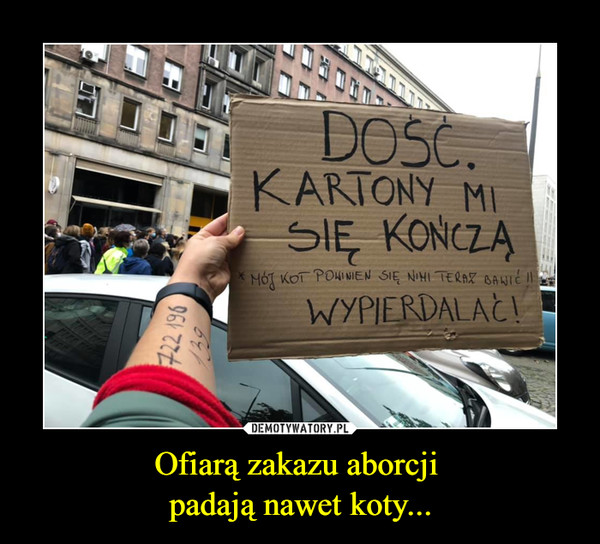 Ofiarą zakazu aborcji padają nawet koty... –  DOŚĆKARTONY MISIĘ KOŃCZĄMÓJ KOT POWINIEN SIĘ NIM TERAZ BAWIĆWYPIERDALAĆ!
