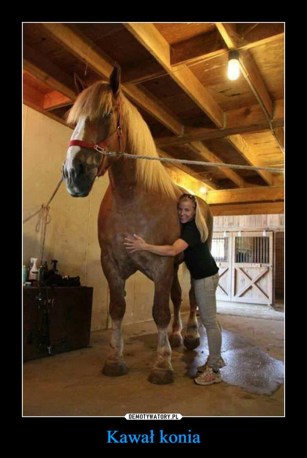 Kawał konia –