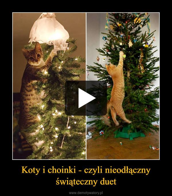 Koty i choinki - czyli nieodłączny świąteczny duet –