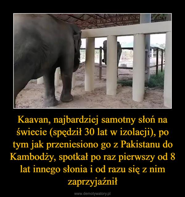 Kaavan, najbardziej samotny słoń na świecie (spędził 30 lat w izolacji), po tym jak przeniesiono go z Pakistanu do Kambodży, spotkał po raz pierwszy od 8 lat innego słonia i od razu się z nim zaprzyjaźnił –
