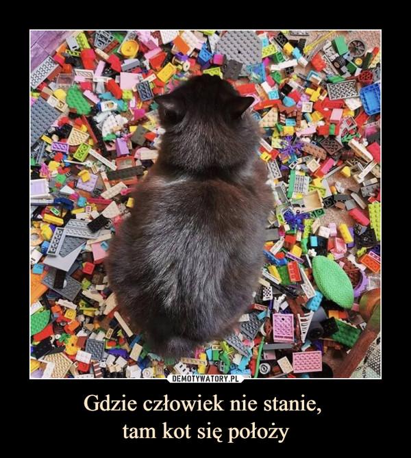 Gdzie człowiek nie stanie, tam kot się położy –