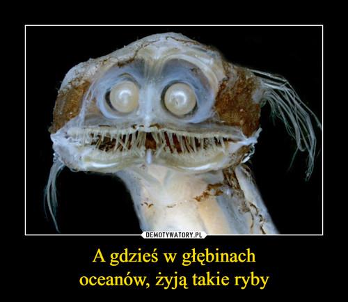 A gdzieś w głębinach oceanów, żyją takie ryby