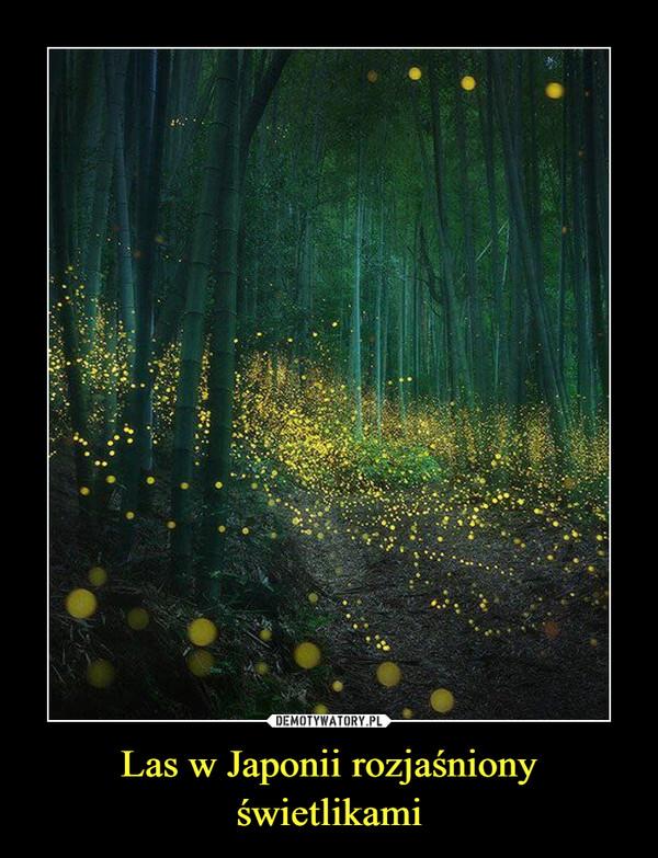 Las w Japonii rozjaśniony świetlikami –