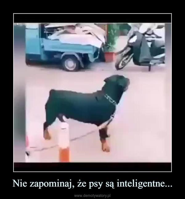 Nie zapominaj, że psy są inteligentne... –