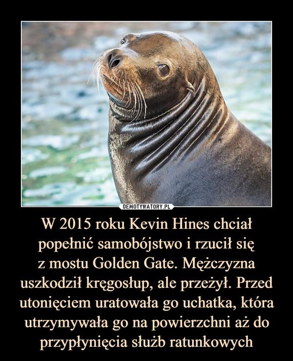 W 2015 roku Kevin Hines chciał popełnić samobójstwo i rzucił się z mostu Golden Gate. Mężczyzna uszkodził kręgosłup, ale przeżył. Przed utonięciem uratowała go uchatka, która utrzymywała go na powierzchni aż do przypłynięcia służb ratunkowych