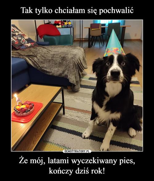 Tak tylko chciałam się pochwalić Że mój, latami wyczekiwany pies, kończy dziś rok!