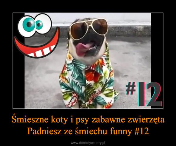 Śmieszne koty i psy zabawne zwierzęta Padniesz ze śmiechu funny #12 –